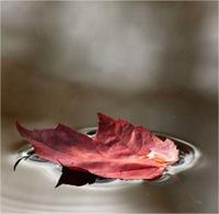 Relájate con estas fotografías de otoño