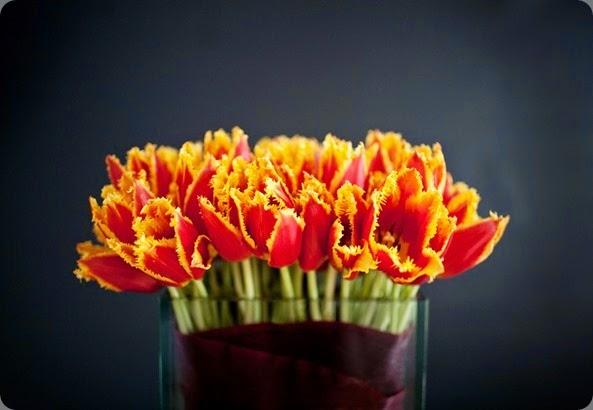 tulips medphoto_shoot_brooke_058 L'Oasis
