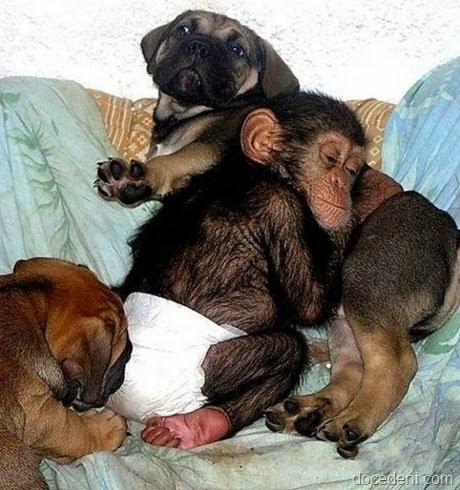 macaco e cadela4pg