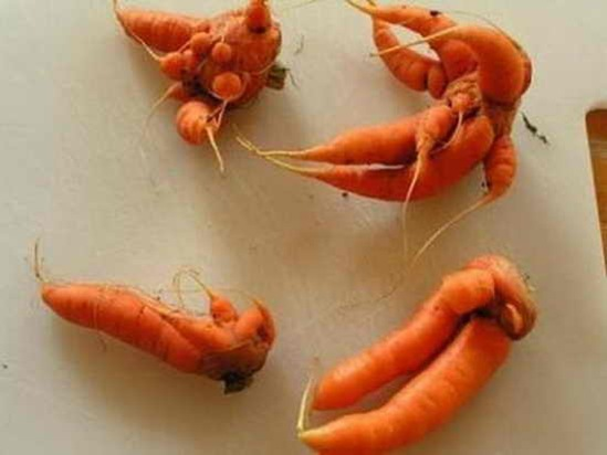 creepiest_vegetables_08