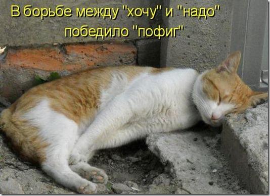 kotoatrix_17