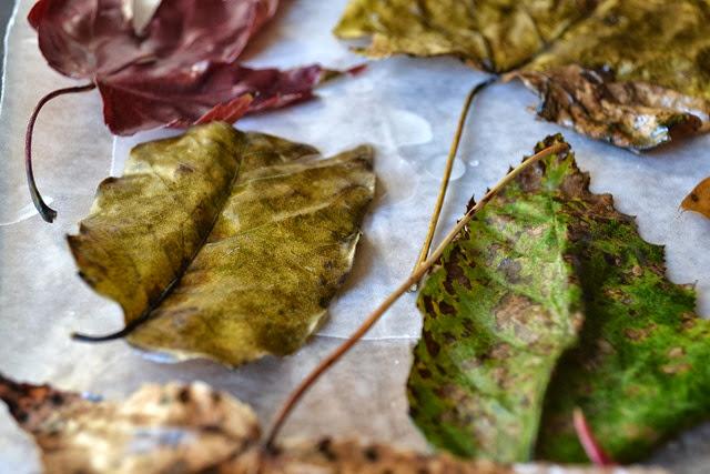wax leaves 5-1