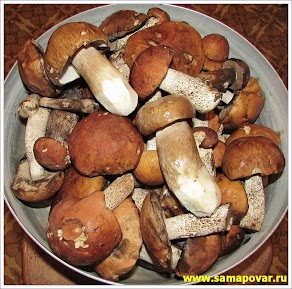 Белые грибы и подосиновики. www.samapovar.ru