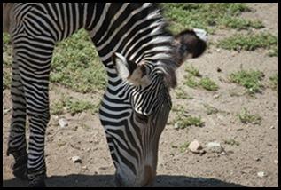 Zoo5 029