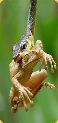 frog-_1837515b