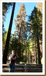 Ron in Mariposa Big Trees-Yosemite