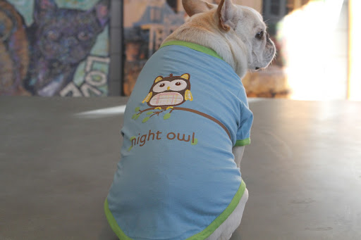 The back features a night owl and it is so comfortable for sleeping in.  Which reminds me - isn't it time for a nap?