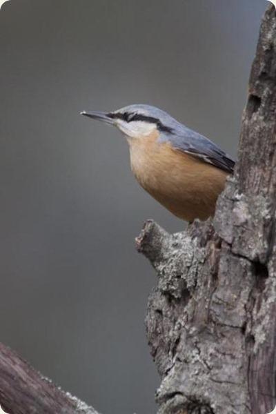 valle d'aosta uccello