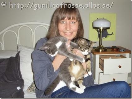 Gunilla-Hedenby-katterna-Sima-Tasse