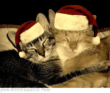 'christmas cats' photo (c) 2006, tuija2005 - license: http://creativecommons.org/licenses/by/2.0/
