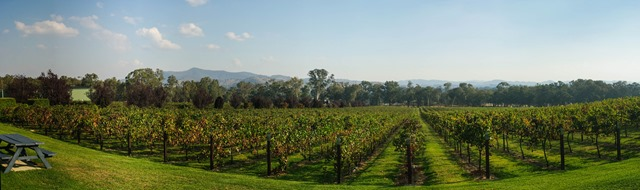 vineyard pano 2b-1