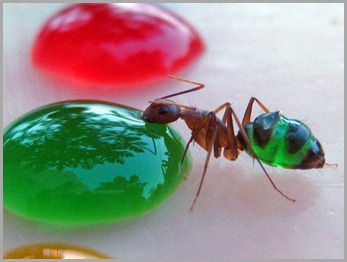 coloured-ants1