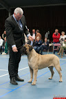 20130510-Bullmastiff-Worldcup-0795.jpg