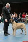 20130510-Bullmastiff-Worldcup-0795.jpg