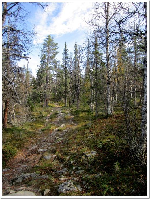 Stenig stig bland döda träd inte så upphetsande direkt.