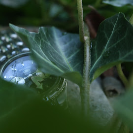 by Aires Spaethe - Nature Up Close Leaves & Grasses ( plant, time, watch, leaves, close up, object )