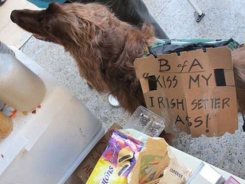 cute-pets-at-occupy-wall-street-19