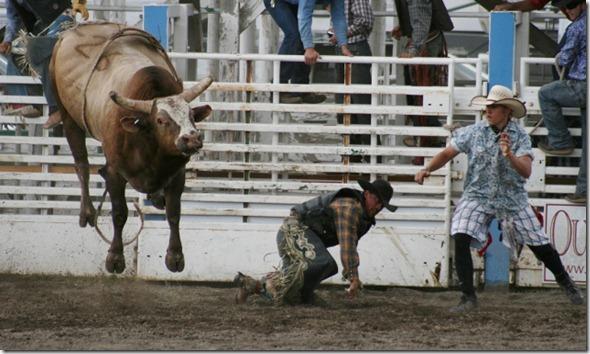 692 bull (640x381)