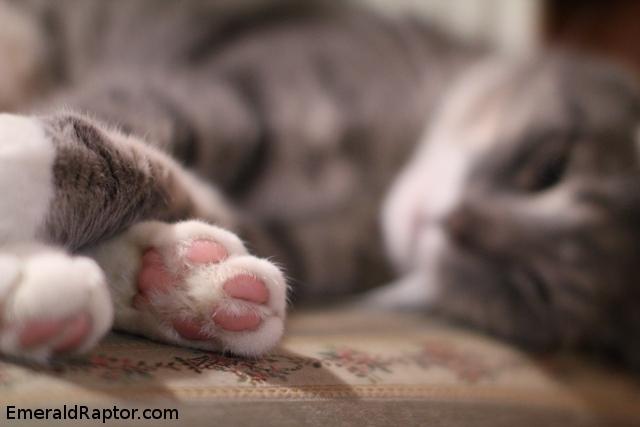 Kattepoter