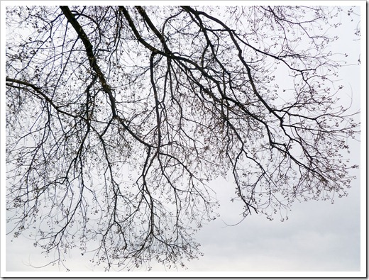 120131_baretree2
