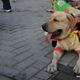 Pet Express Doggie Run 2012 Philippines. Jpg (246).JPG