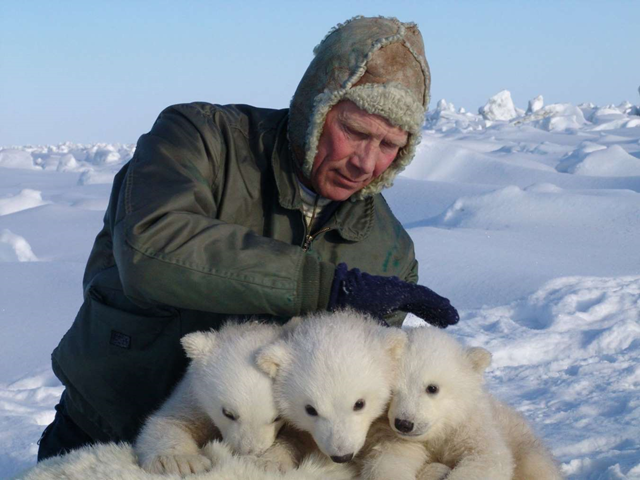 This handout photo provided by the US Geological Survey, taken in 2005 shows Steve Amstrup holding triplet polar bear cubs in Prudhoe Bay, Alaska. A new U.S.-Canada study says a key polar bear population fell nearly in half in the past decade, with scientists seeing a dramatic increase in young cubs dying. Researchers chiefly blame shrinking sea ice from global warming. Scientists from the U.S. Geological Survey and Environment Canada tagged and released polar bears in the southern Beaufort Sea from 2001 to 2010. The bear population shrank to about 900 in 2010, down from about 1,600 in 2004. Photo: USGS / AP Photo
