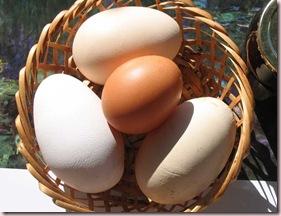 Huevos-Mw