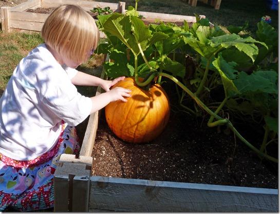 Garden Pumpkin 2