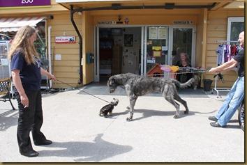 Huldra meets an Irish Wolfhound