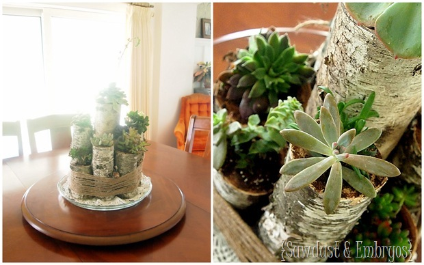 Succulent Centerpiece using Birch Logs {Sawdust & Embryos}