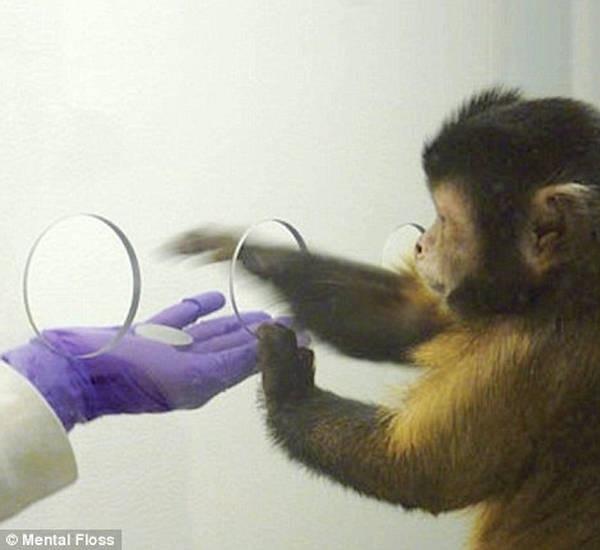 6- Macacos-prego e dinheiro