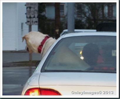 rear seat driver