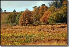 Bradgate Park D50  27-10-2012 13-22-44