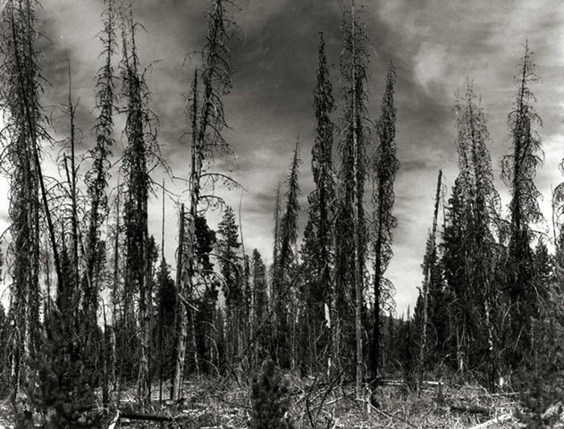 Dying forest near South Sister, Smith Rock State Park, Oregon. Robert Brown