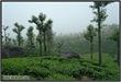 AVV_079__DSC0264-Edit_www.keralapix.com_079