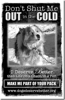 dog-chained-in-cold