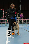 20130510-Bullmastiff-Worldcup-0487.jpg