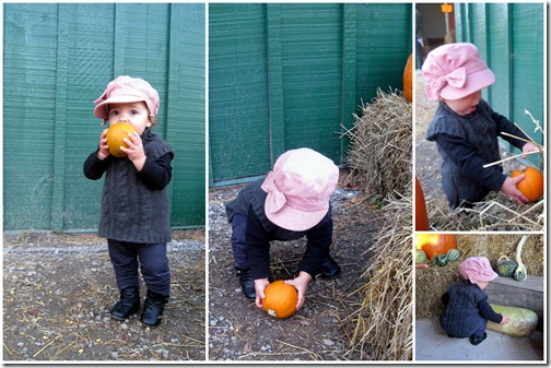 Pumpkin Patch Two1