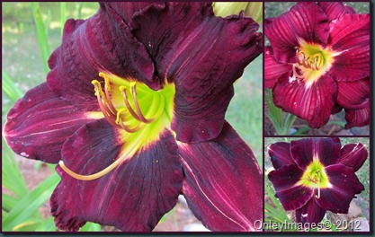 day lily collage2
