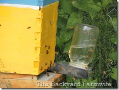 bee syrup recipe- The Backyard Farmwife