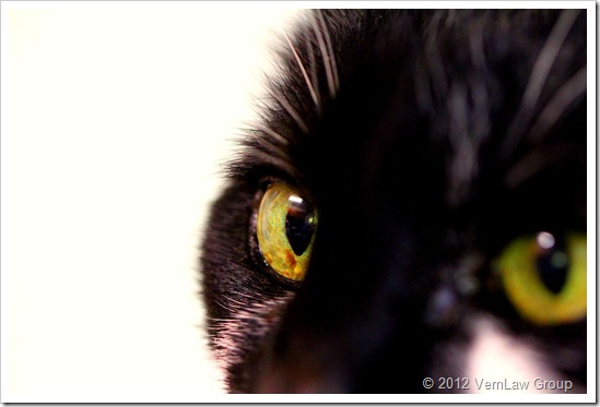 Cat'sEyeIMG_8248