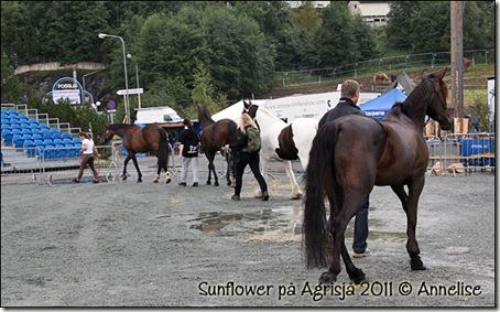 2011-agrisjaa_06