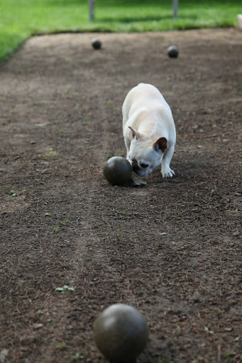 And while I'm at it, I'll give my ball a little shove.  Franny's too busy lounging on the spectator bench to notice anyway.