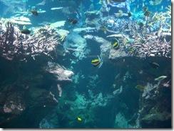 2012.09.02-025 aquarium