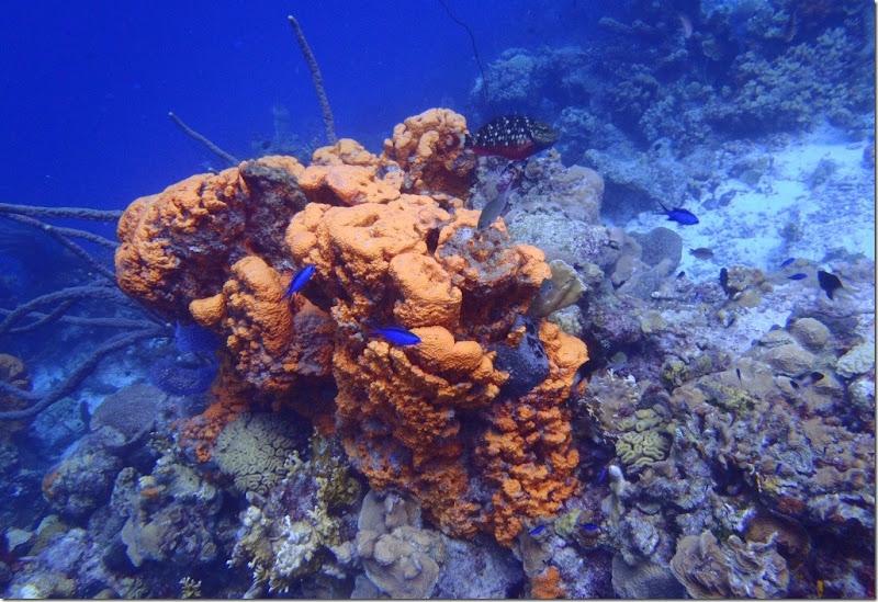 023l orange koralle