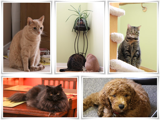 Finnegan's feline brother and sisters - from top left clockwise - Beau, Sweetie, Bella and Finnegan as a puppy