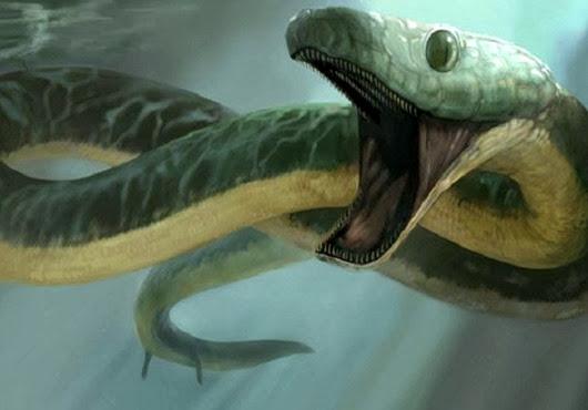 morskie-zmei