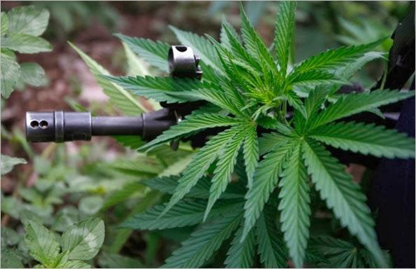 Marihuana-14