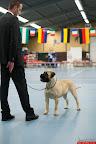 20130511-BMCN-Bullmastiff-Championship-Clubmatch-1813.jpg