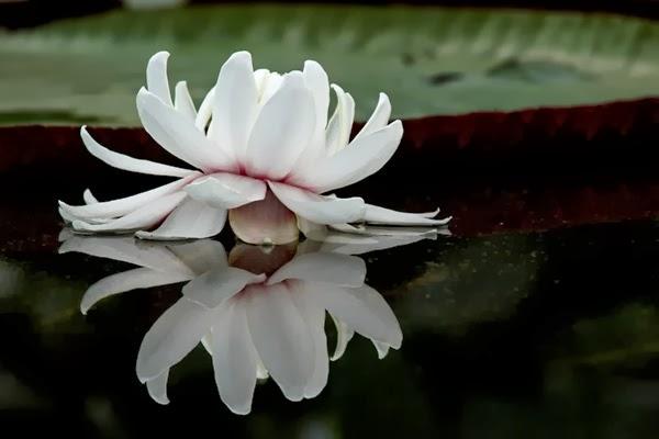 Adelaide flowers